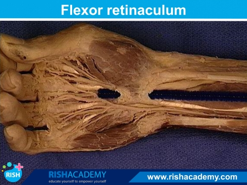 Anatomy Dissection www.rishacademy.com